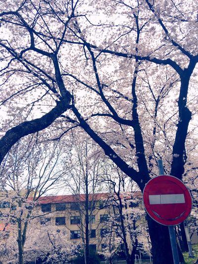 Spring Jeonju