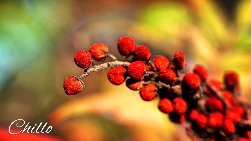 Home ☺️ Nature Beauty Sony A6000 Macro Autumn Color EyeEm Masterclass Eye4photography  Photography Bokeh