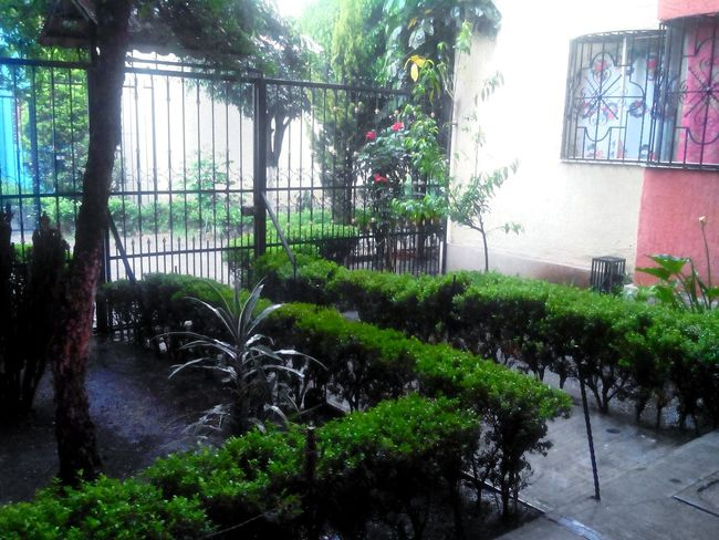 Rain Afternoon Plants Trees Home Urban Landscape Mexico Distrito Federal  Relaxing Enjoying Life