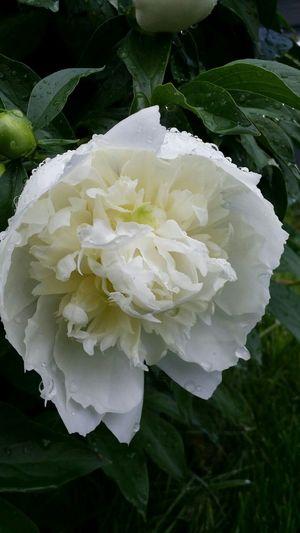 Photo Des Fleurs White