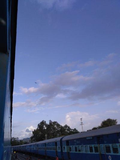Bird Sky Animal