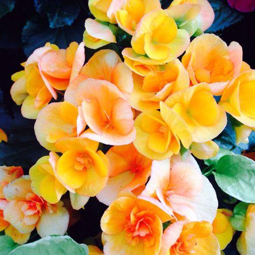 EyeEm Flower Eye Em Nature Lover Enjoying Nature Flower Porn