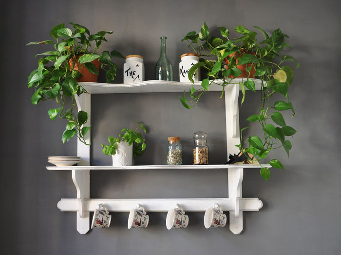 Potted Plants And Ceramics On Shelf At Home