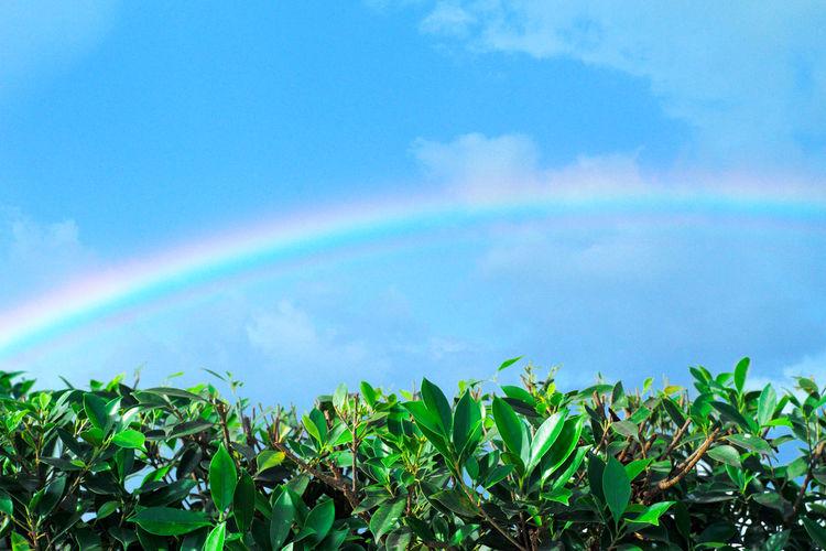 Rainbow over trees against blue sky