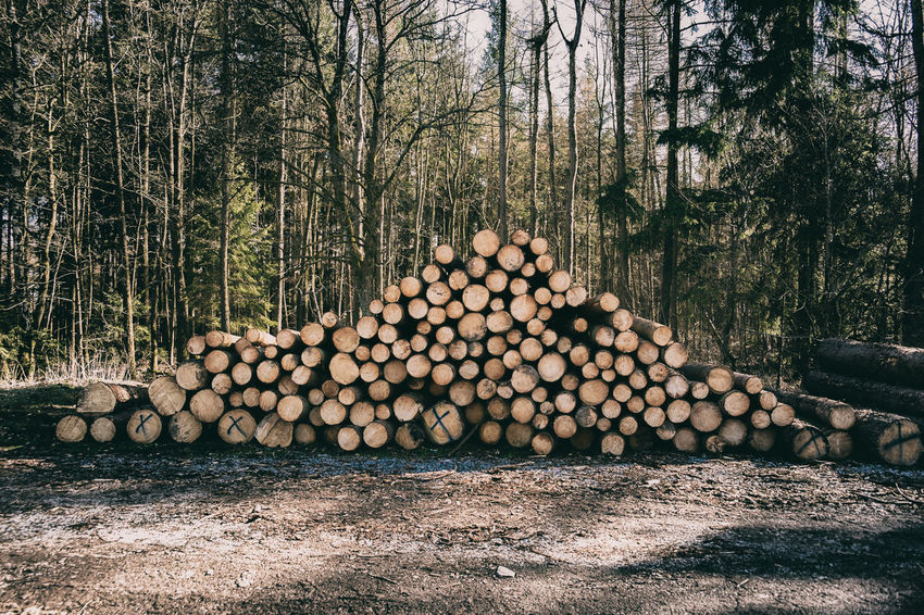 Gefällte Holzstämme Abundance Deforestation Environmental Issues Firewood Forest Fuel And Power Generation Heap Land Large Group Of Objects Log Lumber Industry Nature No People Outdoors Plant Stack Timber Tree Wood Wood - Material WoodLand Woodpile