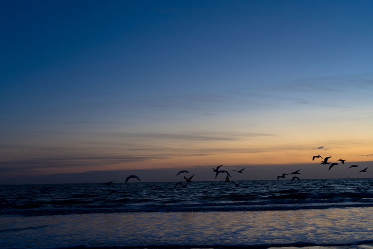 Silhouette of seagulls on beach against sky during sunset