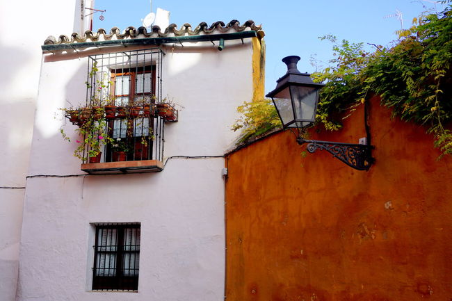 Andalucia Spain Andalucía Andalusia Sevilla Sevilla Spain Seville Andalusian Architecture Animal Themes Architecture Building Exterior Built Structure Day House Low Angle View Nature No People Outdoors Plant Seville,spain Tree Window Window Box