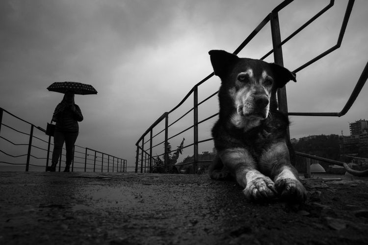 Watching the rain A New Perspective On Life One Animal Dog Canine Domestic Animals Nature People Day Cloud - Sky Domestic Pets Standing