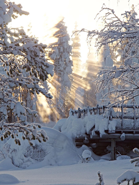 storforsen Snow Winter Cold Temperature Nature White Color Weather Tree Beauty In Nature Tranquil Scene Scenics Tranquility No People Frozen Outdoors Day Snowcapped Mountain Mountain Snowdrift Landscape Sky EyeEmNewHere