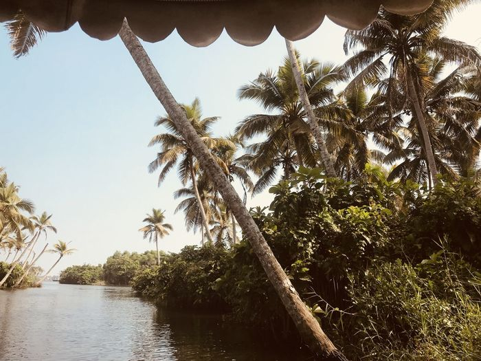 Hot India Palm Tree South India Boat Coconut Palm Tree Kerala Kerala The Gods Own Country ;) Lake Poovar Scenics First Eyeem Photo