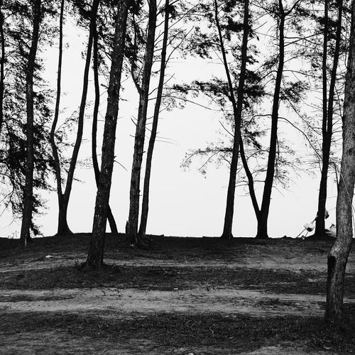 """The world is a shadow play."" TreePorn Pantai Sepat Kuantan Malaysia Black And White Photography Vscocam"