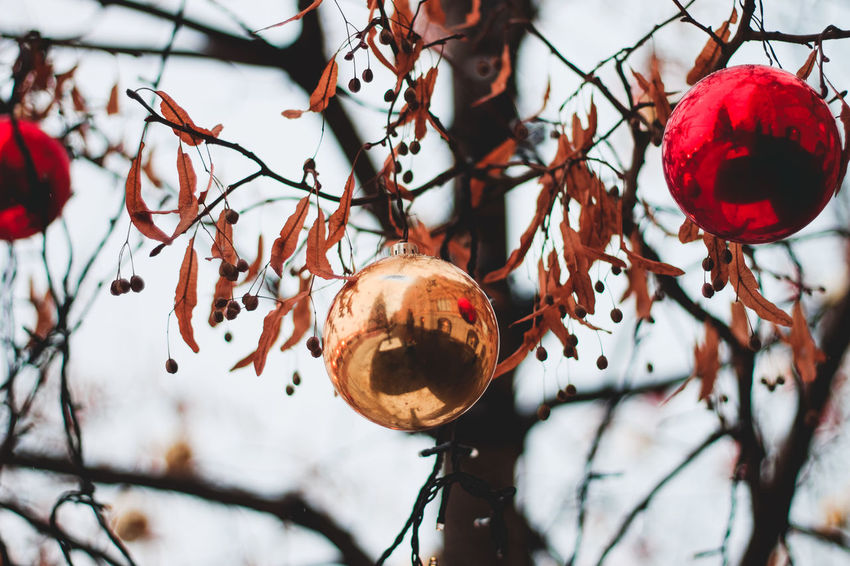 Balls Branch Christmas Decorations Close-up Focus On Foreground Low Angle View Outdoors Tree Exploring Style