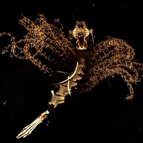 Assemblage Beauty Redefined Naturephotography Close Up Grasses Bones Skull