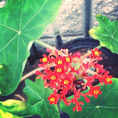 Taking Photo Of Plants