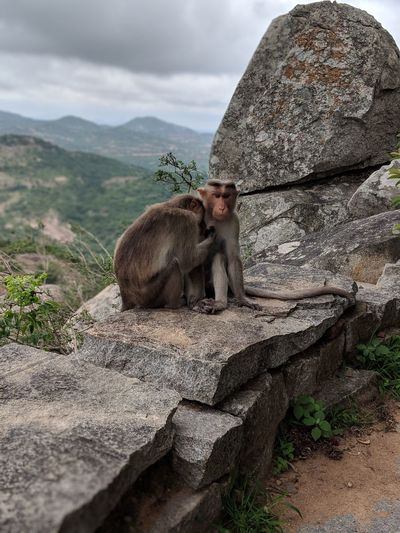 Caught in the act Nature Natural Animals EyeEm Selects The Traveler - 2018 EyeEm Awards Greenary Pleasant Habitat Baboon Mountain Sky Monkey Primate