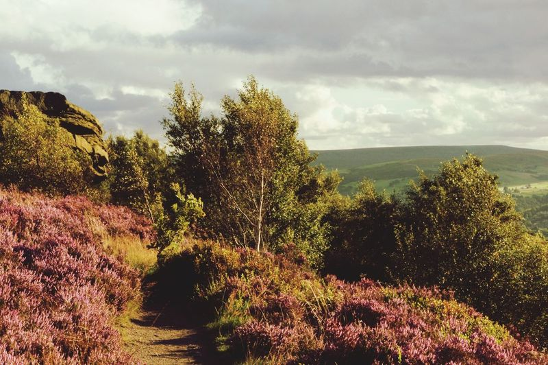 Tree Cloud - Sky Nature Growth Landscape Plant No People Outdoors Beauty In Nature Scenics Day Sky Flower Norland Moor Summer Tranquil Scene Freshness Moors Calderdale Yorkshire Tranquility Heather Beauty In Nature Rural Scene Nature Lost In The Landscape