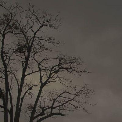 Yaprak dökünce üşür mü ağaçlar Yada ayrılık üzer mi onları da 🍃🍂📷 Ig_photostudio Ig_alaturka Ig_turkey Ig_fotografkaresi Evrenselkareler Ig_eurasia Altinvizor Iggloballife Sendeceksene Bd_turkey Sizingordukleriniz Awesomeshotz Insta_fenomen Grafimx Fotosentez Fotogulumse Kadraj_arkasi Vscocu Birvsco Istanbulpage Trtbelgesel Fotoanadolu Photoanadolu Profesyonelfotograf Fototurkey gokkusagıphotography gokyuzulerikoleksiyoncusu insta_ankara harika_dunya vscocam