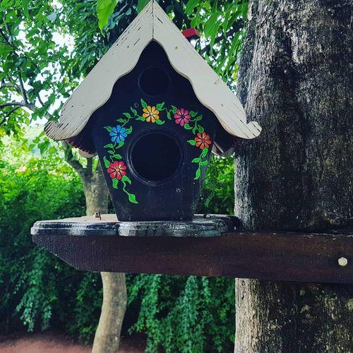 casinha de pássaro, bird house, casa de pájaros Tree Water Day Outdoors No People Nature