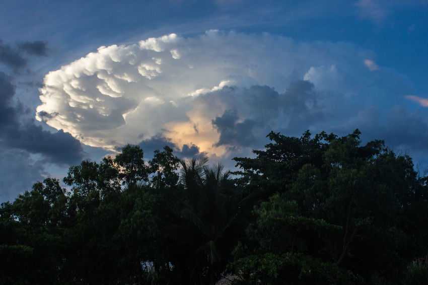 Erupting Beauty In Nature Cloud - Sky Day Growth Julhofragaphotography Low Angle View Nature Nature No People Outdoors Scenics Sky Tranquil Scene Tranquility Tree