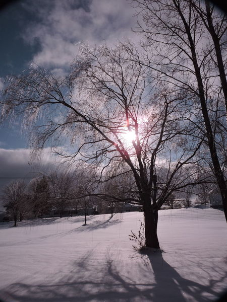 Bare Tree Beauty In Nature Cloud - Sky Cold Temperature Day Ice Covered  Nature No People Outdoors Sky Snow Sunlight Sunset Tree Willows Winter