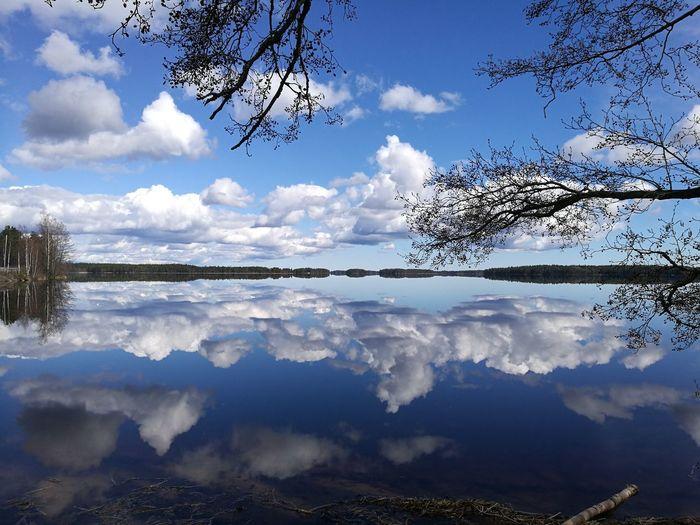 lake Bird Water