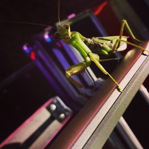 Grasshopper Unvitedguestonconsole Realposer