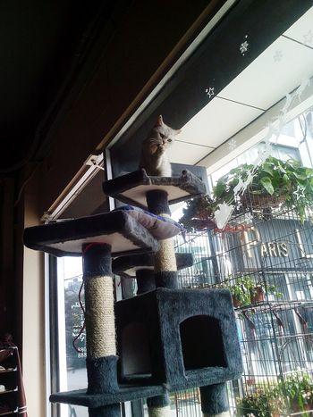 Cat Ctue