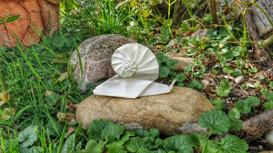 Origami EyeEm Best Shots EyeEm Nature Lover Paperart Hobby Art In The Garden ArtWork Check This Out Getting Inspired