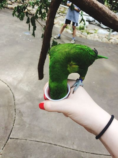 Human Hand Real People One Person Human Body Part Animal Wildlife Parrot Perching Feeding  Lifestyles Personal Perspective