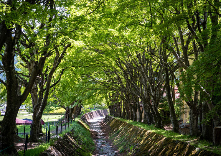 Tree Plant Nature Direction Land Footpath Forest The Way Forward Tranquility Green Color Outdoors No People Water Beauty In Nature Growth Day Lush Foliage Foliage Connection Diminishing Perspective WoodLand Treelined