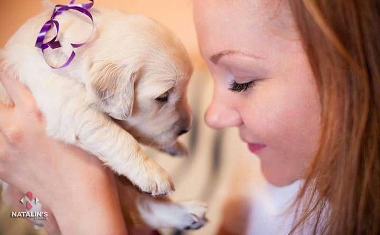 Sweet Leia Eye4photography  Hello World Goldenpuppy Goldenretriever Love Dog Doglovers