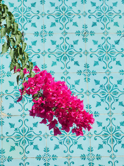 Azulejos Backgrounds Close-up Flower Flowers Freshness Growth Leaf Lisbon Nature No People Pink Plant Portugal Red