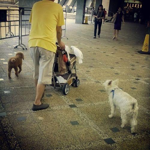 お散歩終わっちゃったみたいですいつも話しかけたいと思っています インコと犬たち やはりこの時間にいるんですね だるまさんアイミスユー