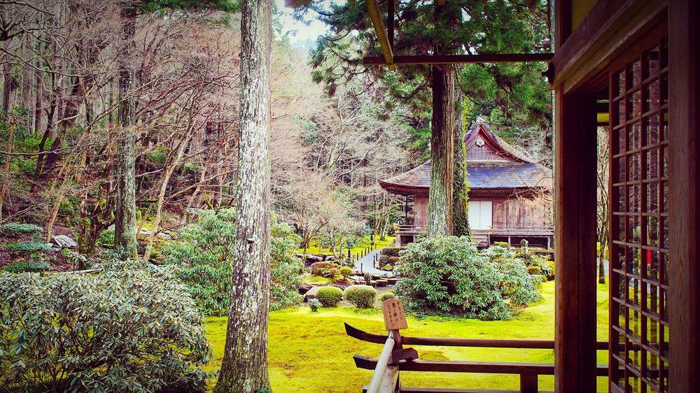 三千院 大原 京都 Kyoto Kyoto, Japan Kyoto Garden Tree 3XSPUnity Beauty In Nature Travel Destinations Japanese Garden Enjoying Life Hello World Relaxing