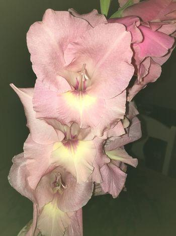 Pink Flowers Flowers Flower Flowerporn Pink Pink Flower Pink Color