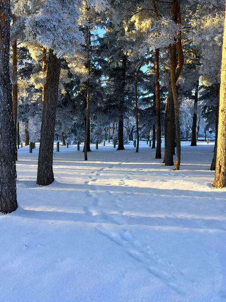 Walk In Cold Snowy Trees Winter Bushes Winter Snow IPhoneography Iphonephotooftheday Iphonephotoacademy IPS2016Winter