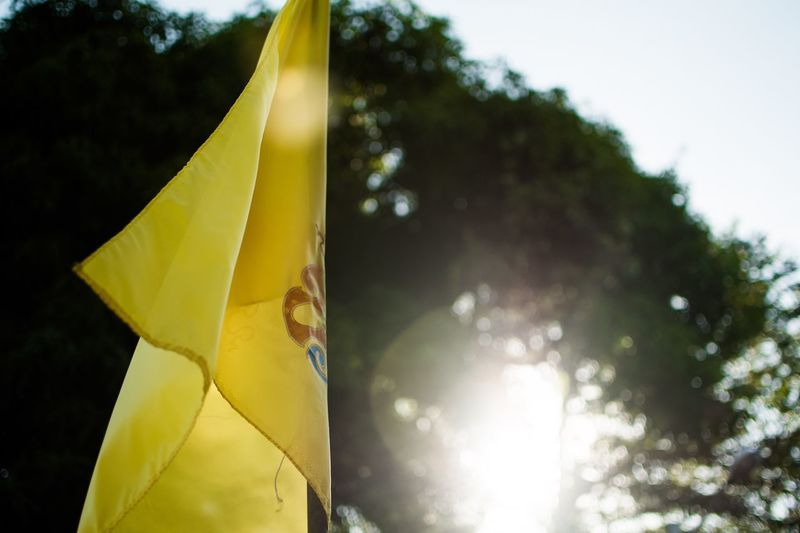 Tree No People Plant Nature Day Sky Yellow Low Angle View Textile Outdoors Close-up Focus On Foreground Sunlight Flag Growth Beauty In Nature Hanging Cloud - Sky Clothing