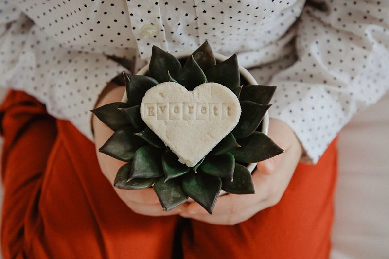 Feb. 14th Succulents Birthday Valentine's Day  Celebration Indoors  Close-up Day One Person Men Human Body Part Real People Human Hand Flower Head People