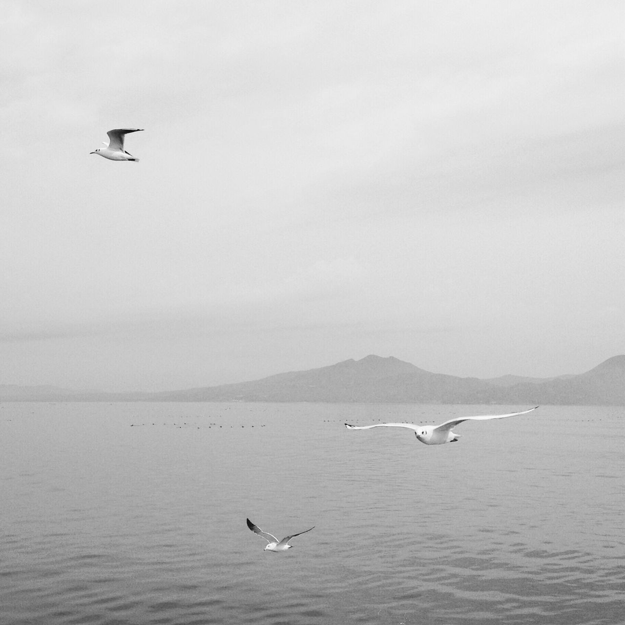 animal themes, vertebrate, animal, animals in the wild, bird, animal wildlife, flying, water, sea, spread wings, waterfront, one animal, sky, nature, no people, beauty in nature, scenics - nature, day, seagull, outdoors