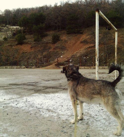 Джордон пес собака Dog Stroigorodok