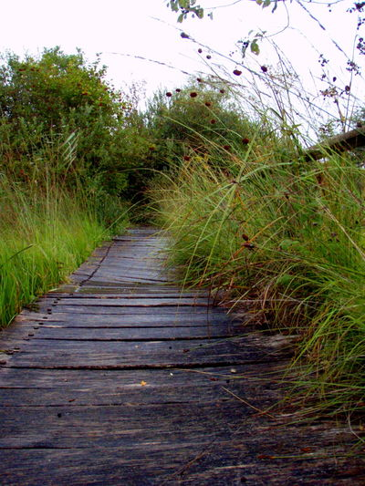 Beautiful Enjoy Nature Nature Outdoors Path Take A Walk Uneven Wooden Path