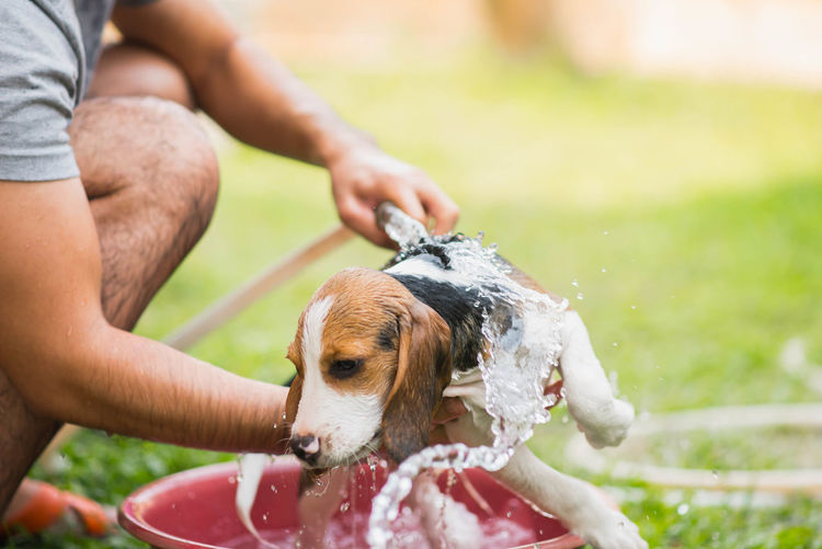 Midsection Of Man Bathing Dog On Field