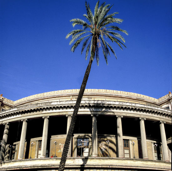 Low Angle View Of Palm Tree And Teatro Politeama Against Clear Blue Sky