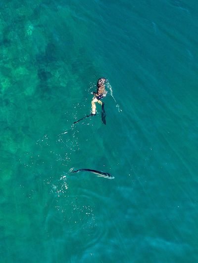Aerial View Sea Water Swimming Spear Spearfishing Fish Rooster Fish Costa Rica High Angle View Nature Ocean