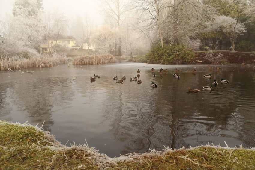 Winterscapes Canonphotography EyeEm Nature Lover Beautiful BC Canon 6D Canon Natural Beauty Beautiful Nature Streamzoofamily