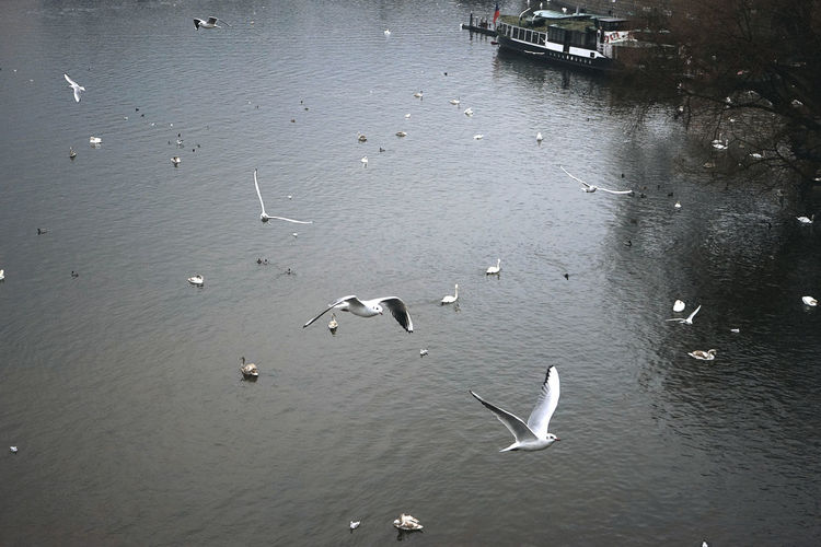 High angle view of swans swimming in water
