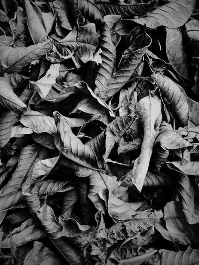 b&w Outdoors Outdoor Photography Blackandwhite Black And White Outdoors Photograpghy  Monochrome monochrome photography B&w B&W Portrait B&w Photography B&W Collection B&w Photo B&W✨ Leaf Backgrounds Full Frame Close-up A New Beginning EyeEmNewHere