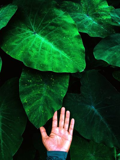 Cropped hand of person touching leaves