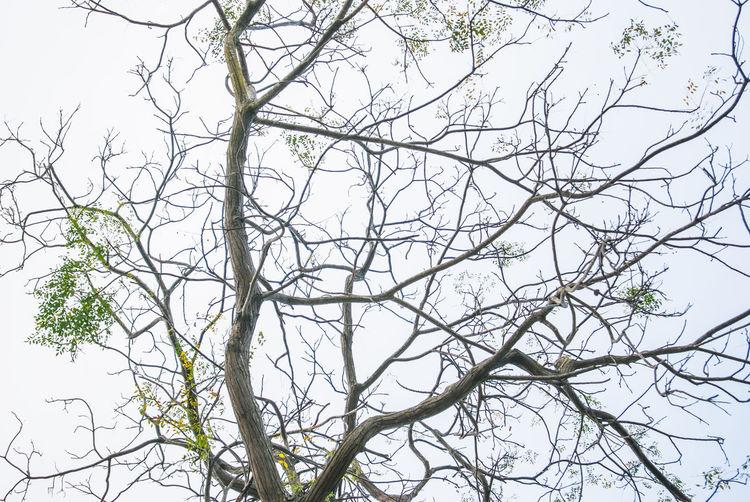 Branch Bueaty