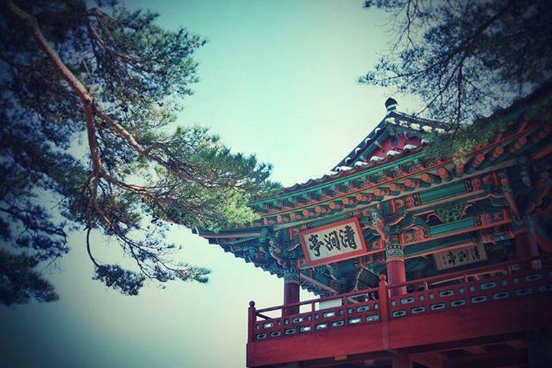 KoreaTour Korea Temple 절 나무